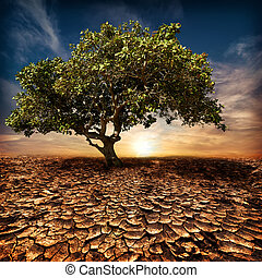 Global warming concept. Lonely green tree under dramatic evening sunset sky at drought cracked desert landscape