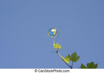 globe on vine leaf