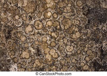 Globular mold wall background with text space - Globular...