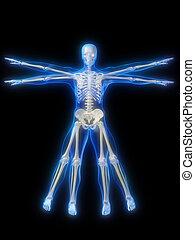 gloeiend, skelet