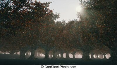 Gloomy autumn forest with fog and rays of the sun