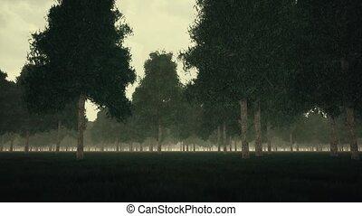 Gloomy dark forest and fog 4k
