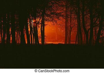 Gloomy park in the fog at night - Gloomy autumnal desolate...
