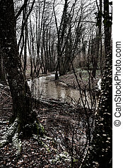 a gloomy torrent flowin in a forest between bare trees