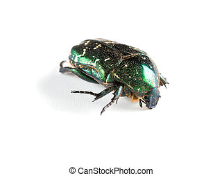 glossy bettle on a white background close up