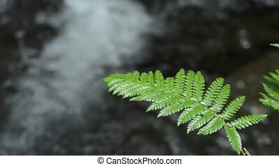 Glossy green fern leaf in front of brook