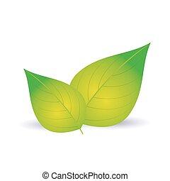 Glossy green leaf