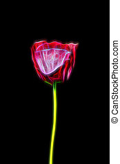 Glow image of Poppy flower