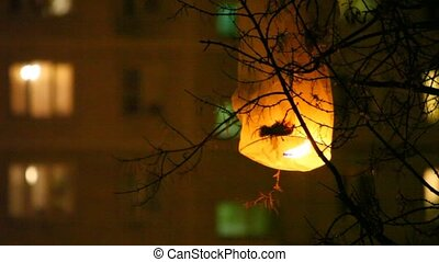 Glowing chinese lantern was hooked for tree at night -...
