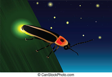 Glowing Firefly - A firefly on a leaf showing off its yellow...