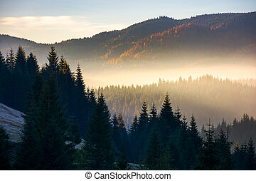 glowing fog in mountains at sunrise. beautiful autumn...