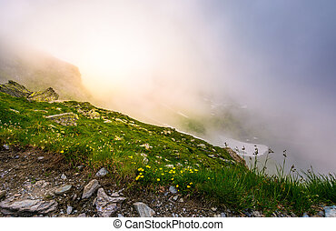 glowing fog over the grassy slope. beautiful nature...