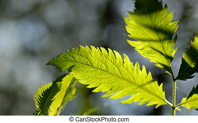 Glowing Forest Leaves 3