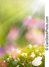 Glowing Spring Flowers - Glowing morning glory flowers in...