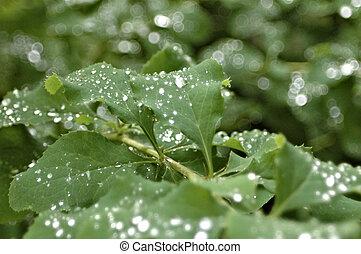 glowing water drops on fresh green leaves