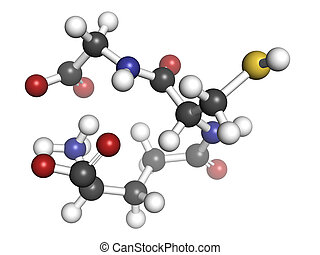 Glutathione antioxidant, molecular model. Atoms are...