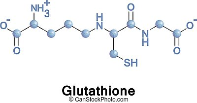 Glutathione important antioxidant