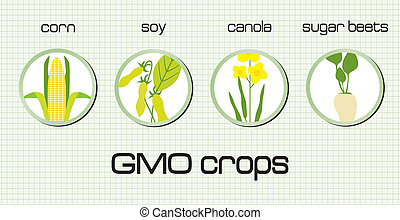 GMO crops, the most disseminated on the green background
