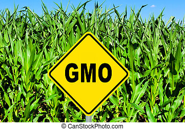 GMO sign - GMO yellow sign with the corn crop in the...