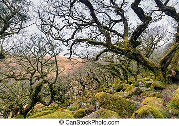 Gnarled Oak Forest - Gnarled oaks at Wistman's Wood on...