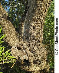 Gnarled Tree branch