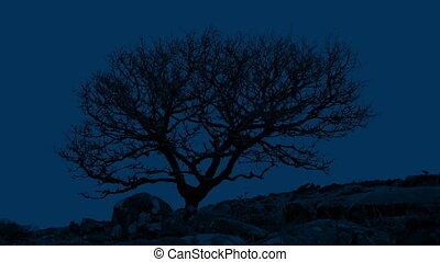 Gnarled Tree In Rocky Landscape At Night - A bare gnarled...