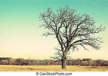 Gnarly Bare Branched Old Oak Tree Isolated in Country