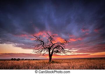 gnarly, träd