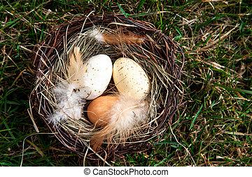 gniazdo, trawa, pisanki