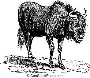 (gnu), altes , wildebeest, stich, schwarz