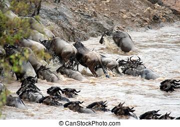 Gnu Migration Kenya
