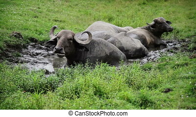 Gnu resting in water because of hot