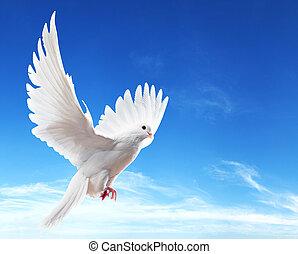 gołębica, na fali, z, skrzydełka, szeroki otwarty