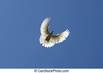 gołębica, na fali