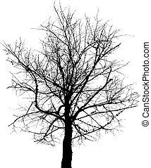 goły, wektor, drzewo, tło