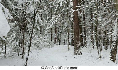Go to the winter forest