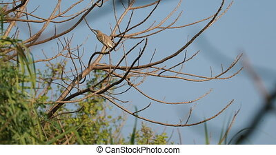 Goa, India. Indian Pond Heron Bird Sitting On Branches Of Tree In Sunny Day.