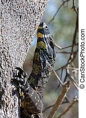 Goanna lizard climbing a tree