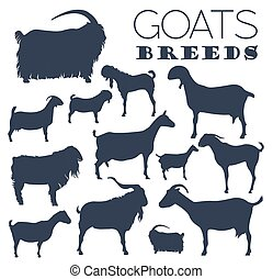 Goat breeds icon set. Animal farming. Flat design. Vector...