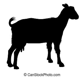 Detailed vector illustration of goat silhouette