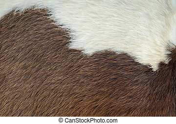 Stock Image Of Goat Fur