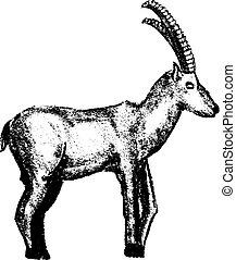 Goat grunge style icon