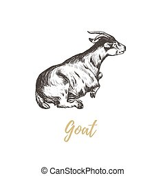 Goat hand drawing. Goat skech.