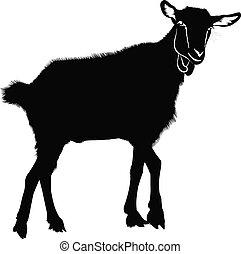Goat kids animals