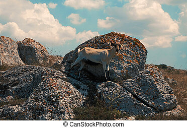 Goat on rocks in front of cloudy sky