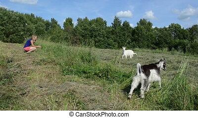 goat small cub meadow