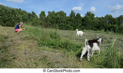 goat small cub meadow - girl sits in the meadow trying to...