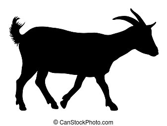 Goat - Vector illustration of goat silhouette