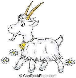 Goat - White goat walking, on a white background