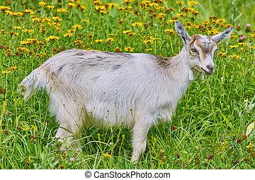 Goatee on Lea